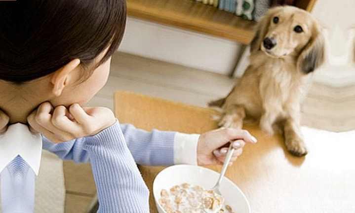 Кормление собак натуральной естественной пищей: таблица рациона, меню на неделю и на каждый день, натуральное питание для крупных собак и щенков