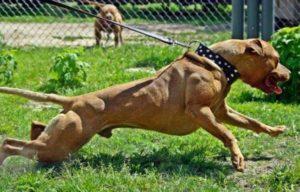 Собака для того, чтобы она охраняла дом