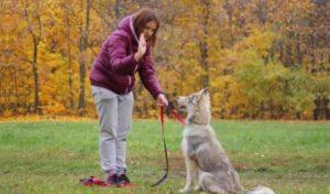 Большинство людей считают, что собаки понимают людей