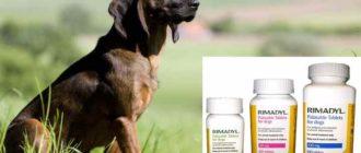 Препарат следует применять строго по инструкции и после консультации с ветеринаром.