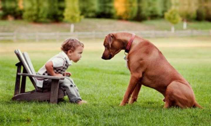 Собака считается представителем крупной породы