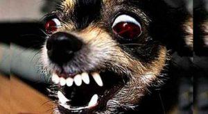 Злые собаки – топ 10 пород, это важная и нужная информация