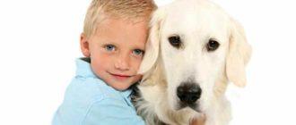 Если вы хотите заводить ребенку собаку, следует помнить, что это ответственный шаг