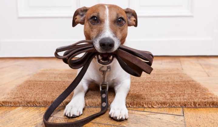 Неважно, на каком языке будут разговаривать с собакой