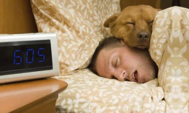 Чаще собака дремлет в таком положении