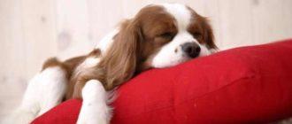 Сон – это то, что объединяет почти всех животных