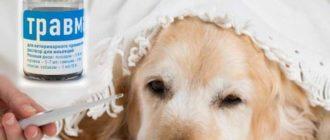 Травматин для собак – продукт отечественной компании