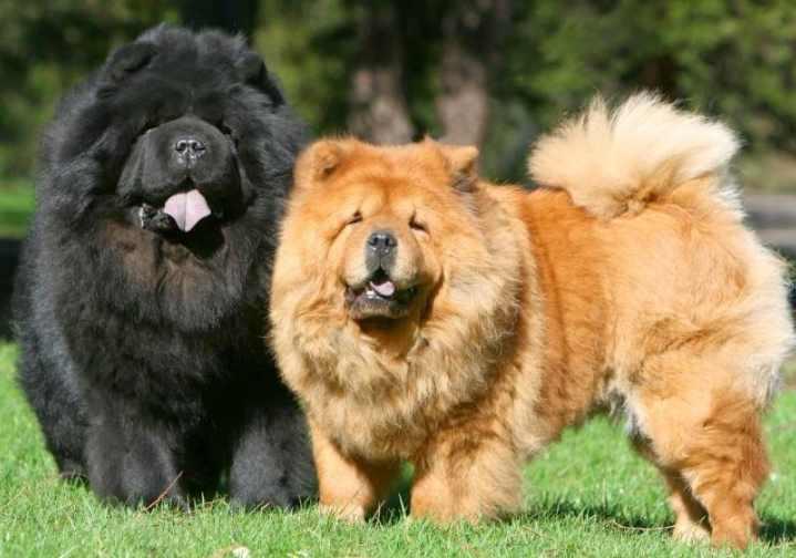 Какого цвета будет язык, определяет состояние собаки
