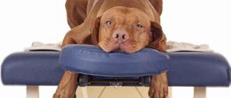 Собаки относятся к пятипалым животным