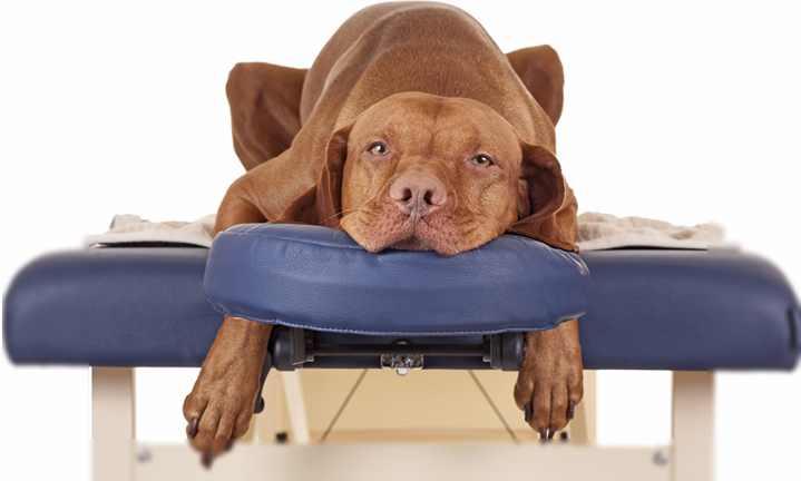 Пять пород собак с перепонками - Советы для домашних животных