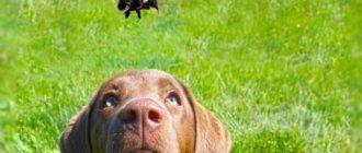 Летом собак подстерегают и некоторые опасност