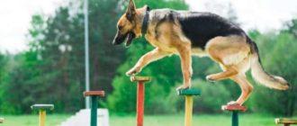Существуют много разновидностей соревнований для собак