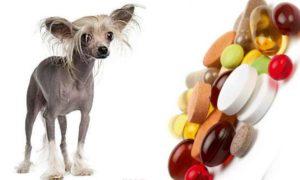 Витаминные добавки и минеральные комплексы необходимы