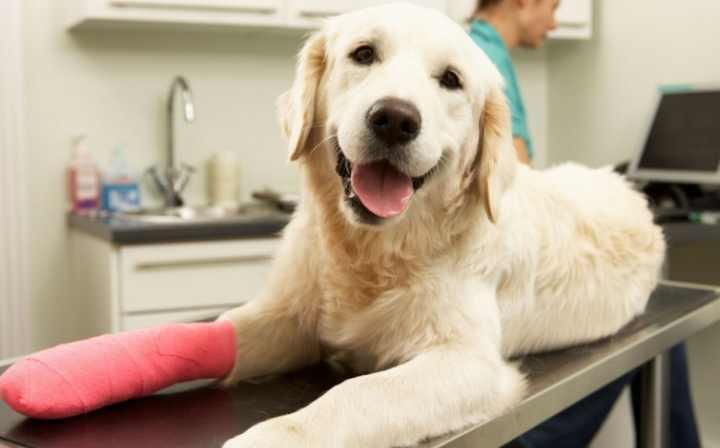 Гелакан улучшает двигательной активности собак