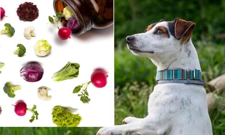 Витамины для собак стоит подбирать не на глаз