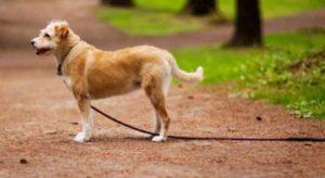 Когда ищете сами, найти фото собаки в телефоне и показывать прохожим.