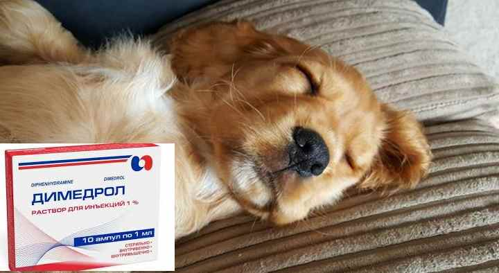 Димедрол собаке при аллергии