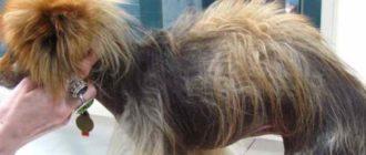 Гормональные причины выпадение волос