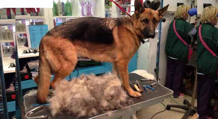 Негормональные причины выпадения волос