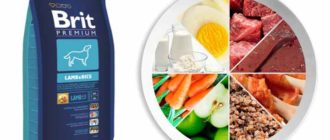 Выбор корма для питомцев с аллергией