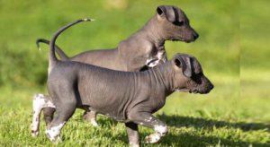 Гипоаллергенные породы собак наиболее популярны в данное время