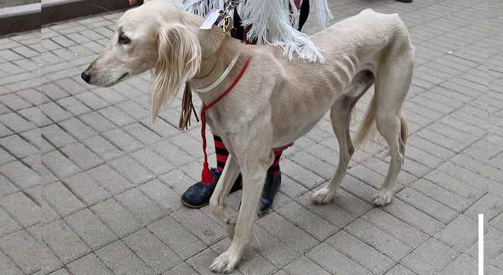 Микоплазмоз: что нужно знать владельцам собак? Обзор +Видео