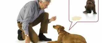 Отучаем крупную собаку писать дома