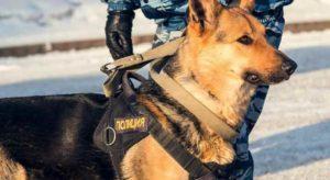 Дрессировка полицейских собак: как подготавливают? Обзор и Советы +Видео