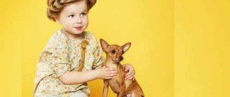Масса собаки должна не превышать 3 килограмм.