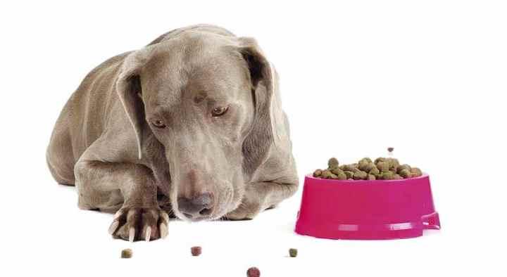 Организм собаки может реагировать, так на стресс