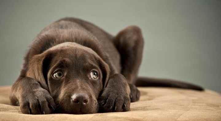 Собака не встает на лапы: причины, ранние признаки, стоит ли бить тревогу?
