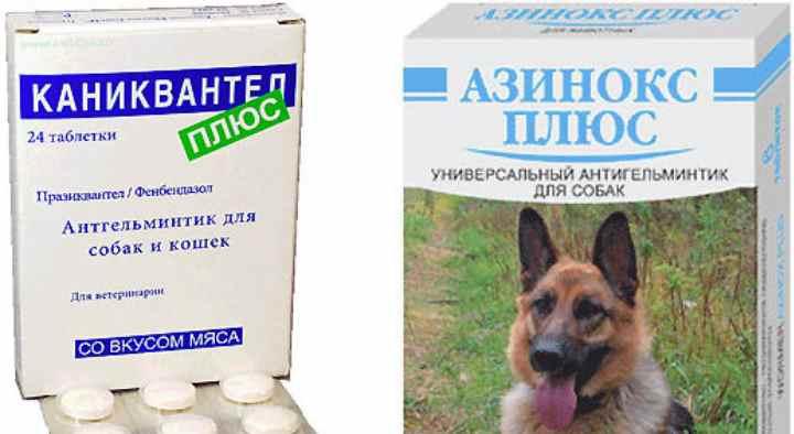 несколько гуманных и безопасных способов дать собаке таблетку