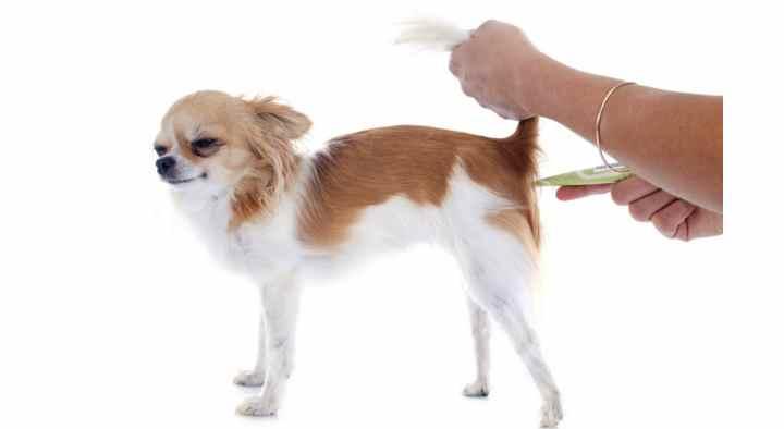 Обращение в ветеринарную клинику