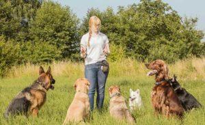 Процесс, при котором собаки обучаются определенным командам