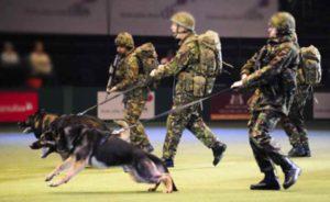 Спортивно-служебные - сюда относятся сторожевые, пастушьи, розыскные и ездовые собаки.