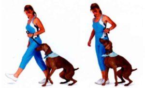 Поначалу приучать собаку к социальной жизни