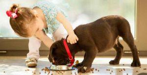 Чем и как кормить лабрадора в домашних условиях