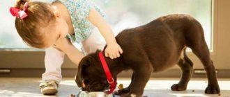 Больные собаки требуют перехода на густые супы и мягкие каши,