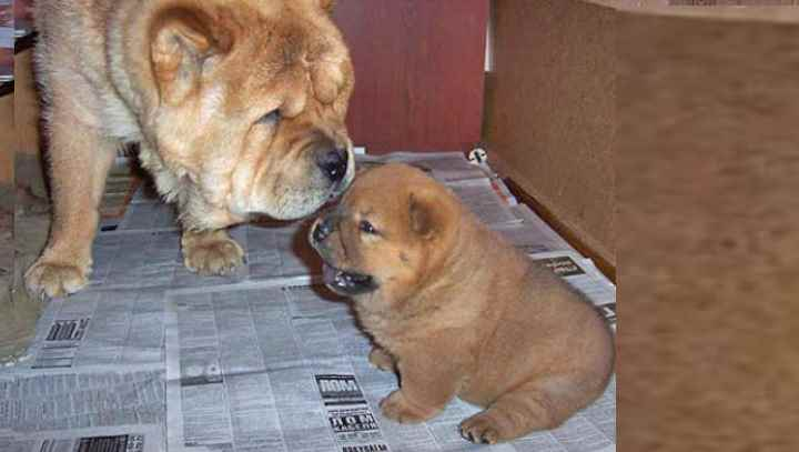 Сами по себе собаки не агрессивные