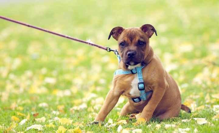 Как дрессировать щенка в домашних условиях