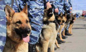 разберём собак, относящихся к служебной группе