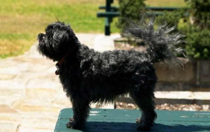 Собака должна быть только чёрной