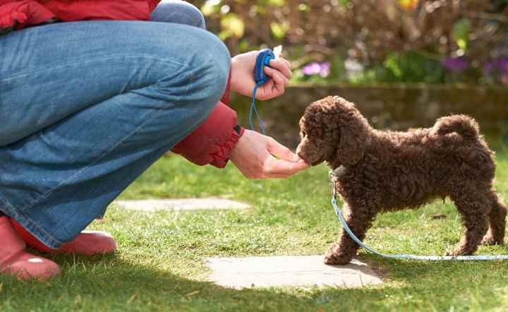 Коробочка, издающая щелчки, способствует лучшему запоминанию собакой команд