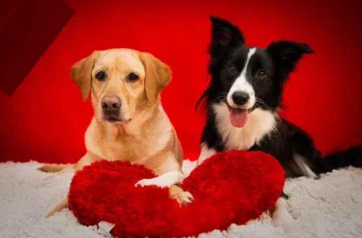При появлении второй собаки, режим дня (прогулок и кормлений) первой не должен поменяться.