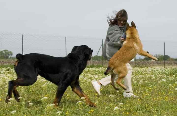 Места должно хватать для обеих собак, чтобы они не притесняли друг друга.