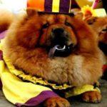 Жители Китая до сегодняшнего дня питаются мясом собак, несмотря на вышедшие запреты