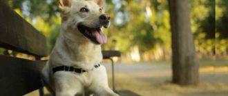 Собака и хозяин – тесный союз