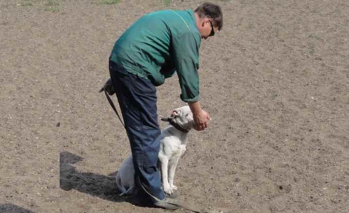 Если вовремя прогулки тянет вас в разные стороны. Из вас двоих хозяин вы, а не собака.