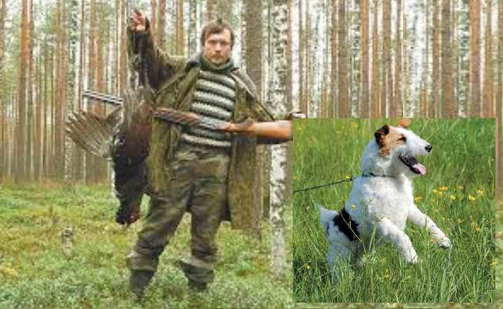 Борзые - были выведены для охоты