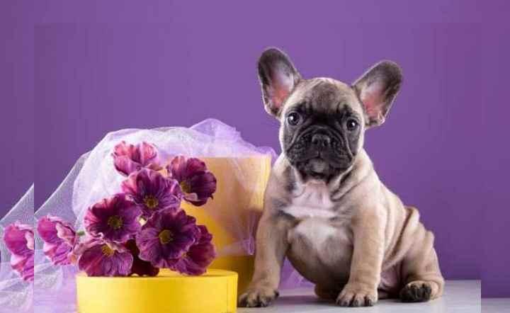 Поиск лучшей клички для вашей собаки
